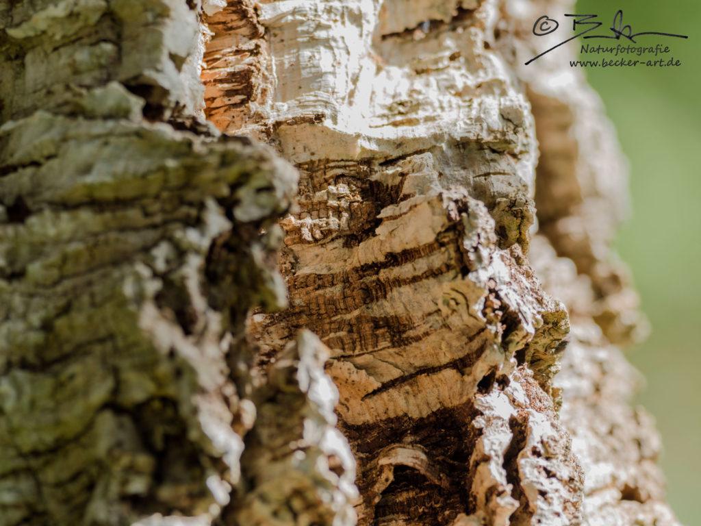 becker-art Bayern Garten Idylle Baum Rinde