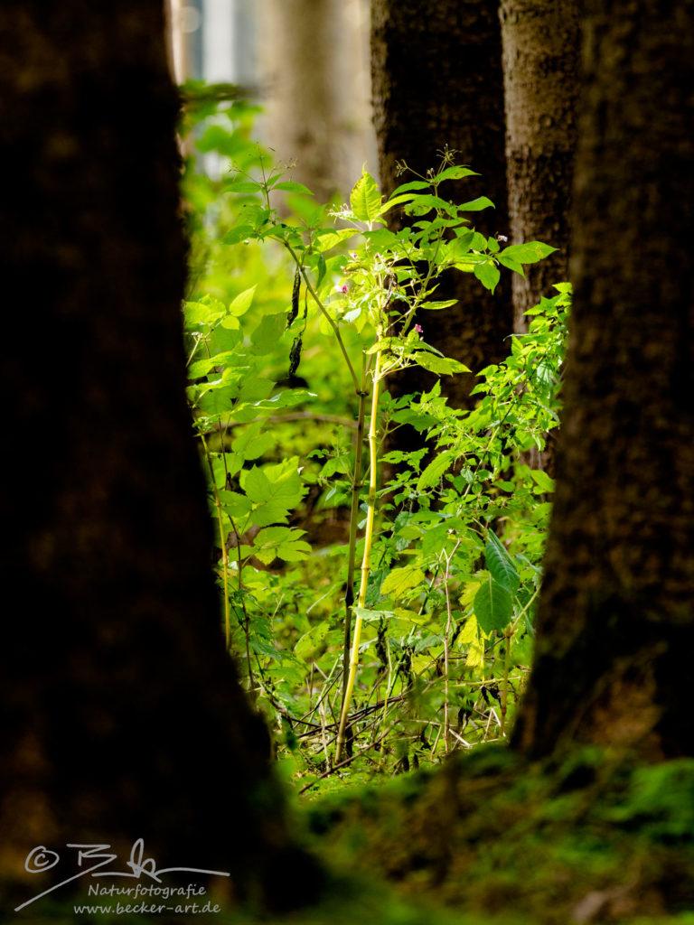 becker-art Bayern Wald Farn Moos Schattenspiel