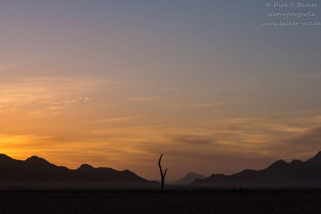 becker-art Natur Afrika Namibia Himmel Nacht Baumstamm