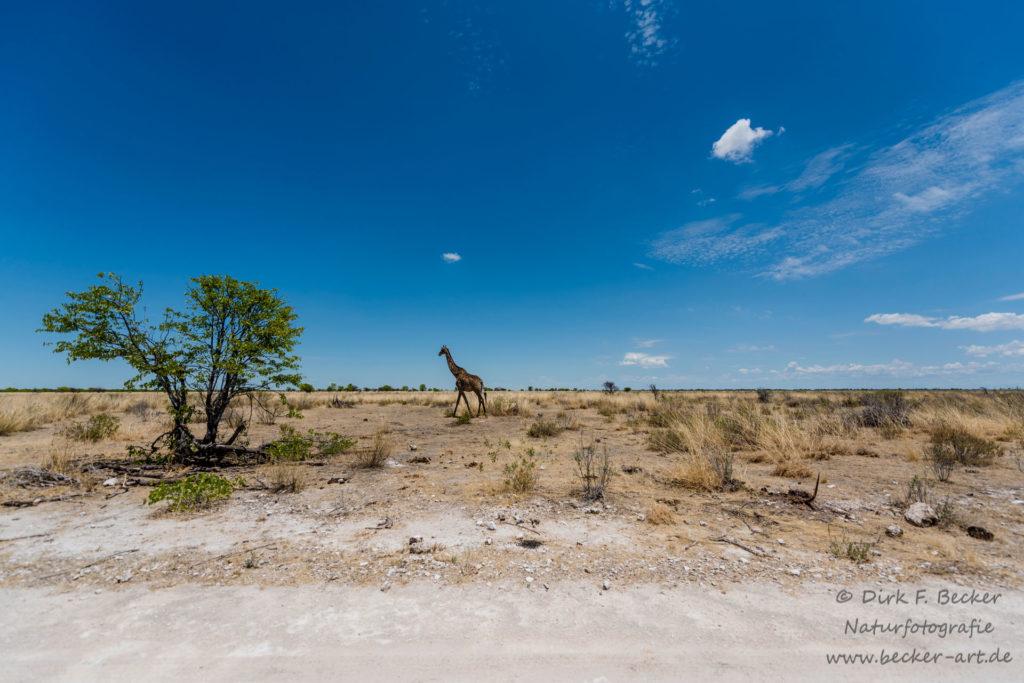becker-art Natur Afrika Namibia Himmel Wolken Giraffe