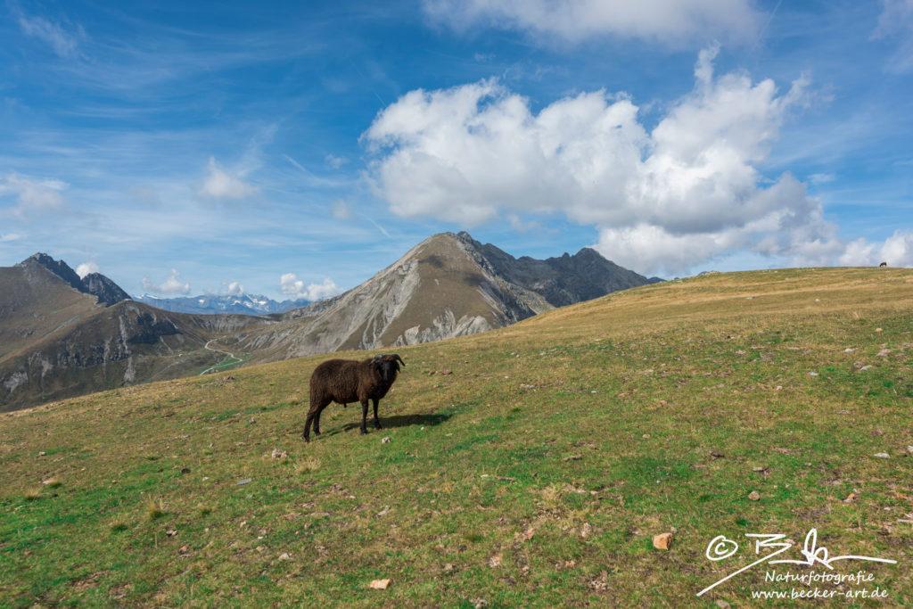 becker-art Berge Himmel Schaf Südtirol
