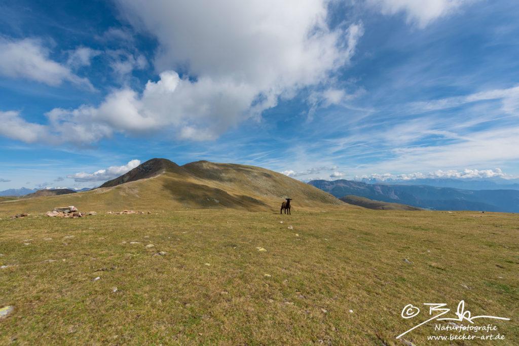 becker-art Berge Himmel Südtirol Schaf Weite